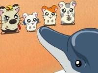 Les Ham-Hams à l'aquarium