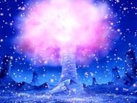 Les cerisiers de Hiluluk ! Le miracle des Drum Rockies