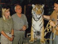 Les tigres (2)