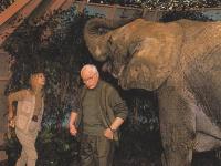 Les éléphants (2)